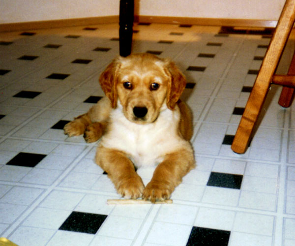 Earliest pic of teddy as a pup